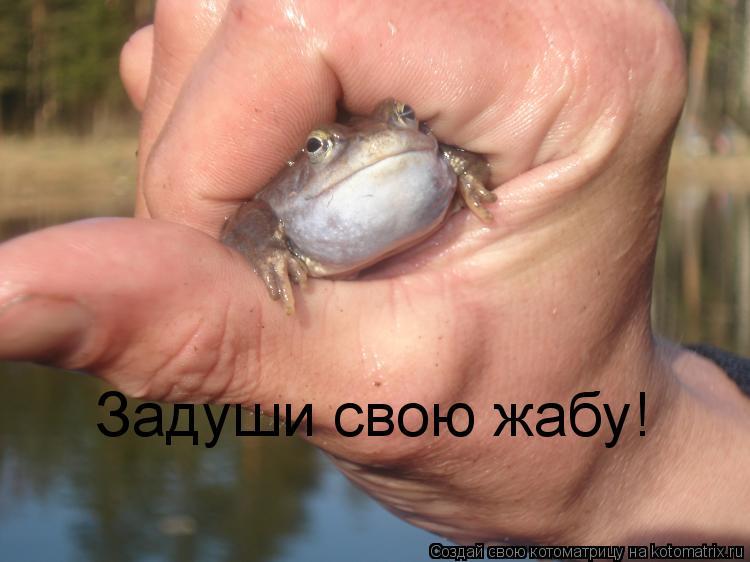 Котоматрица: Задуши свою жабу!