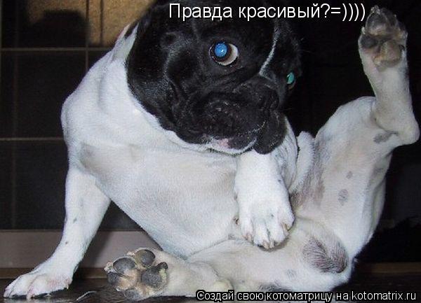 Котоматрица: Правда красивый?=))))