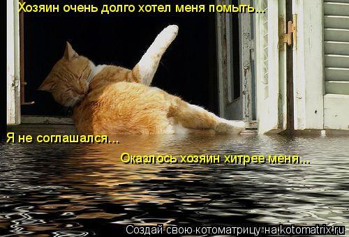 Котоматрица: Хозяин очень долго хотел меня помыть... Я не соглашался... Оказлось хозяин хитрее меня...