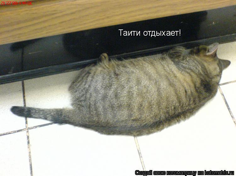Котоматрица: Таити отдыхает!
