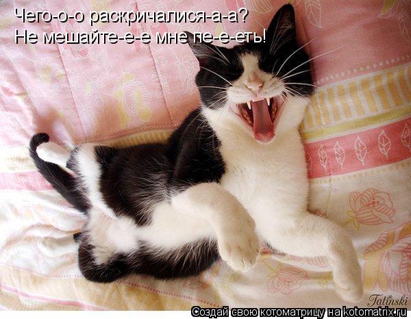 Котоматрица: Чего-о-о раскричалися-а-а? Не мешайте-е-е мне пе-е-еть!