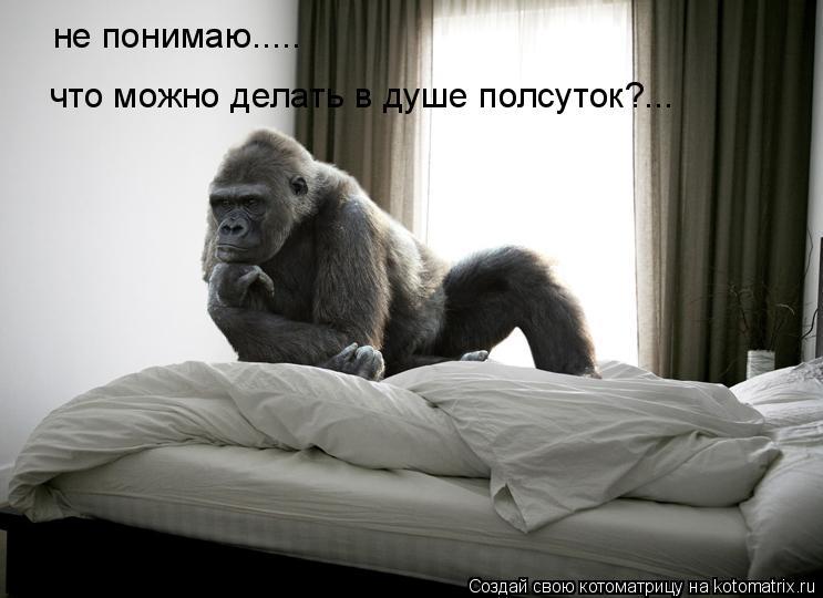 Котоматрица: не понимаю..... что можно делать в душе полсуток?...