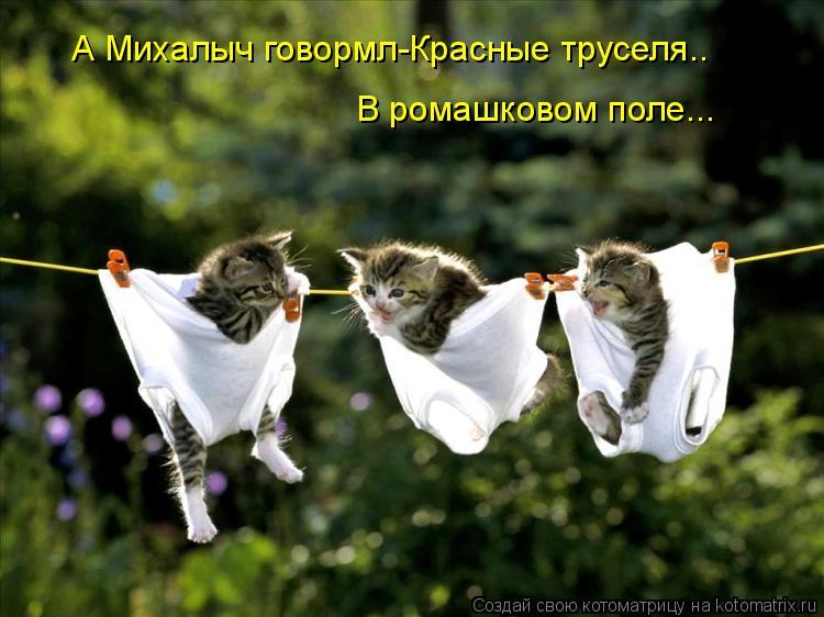 Котоматрица: А Михалыч говормл-Красные труселя.. В ромашковом поле...