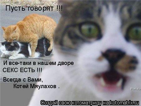 Котоматрица: Пусть говорят !!! И все-таки в нашем дворе СЕКС ЕСТЬ !!! Всегда с Вами,  Котей Мяулахов .