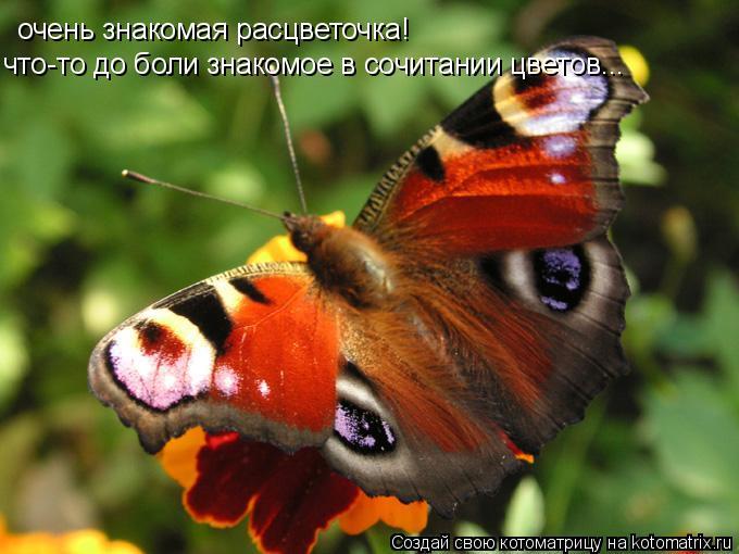 Котоматрица: очень знакомая расцветочка! что-то до боли знакомое в сочитании цветов...
