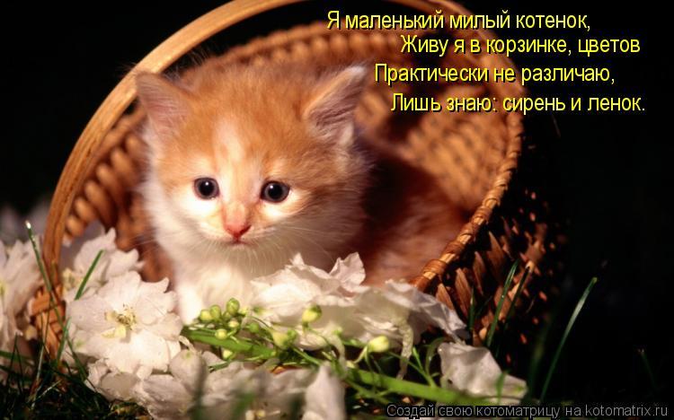 Котоматрица: Я маленький милый котенок, Живу я в корзинке, цветов Практически не различаю, Лишь знаю: сирень и ленок.