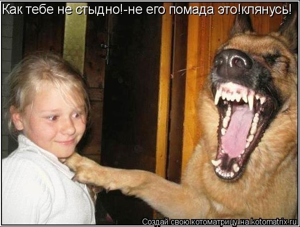 Котоматрица: Как тебе не стыдно!-не его помада это!клянусь!