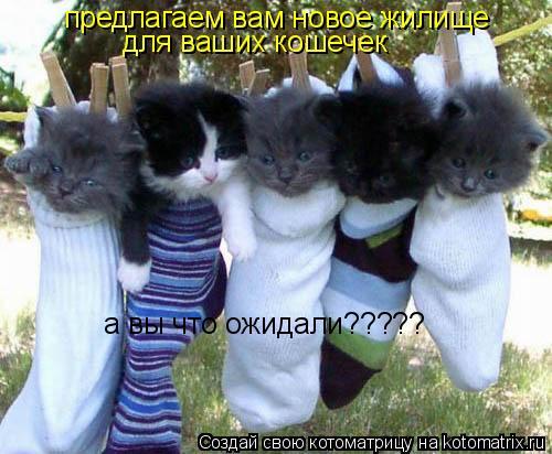 Котоматрица: предлагаем вам новое жилище  для ваших кошечек  а вы что ожидали?????