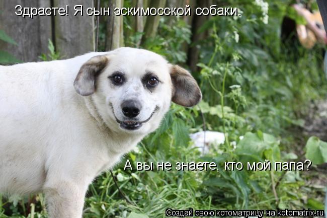 Котоматрица: Здрасте! Я сын эскимосской собаки.  А вы не знаете, кто мой папа?