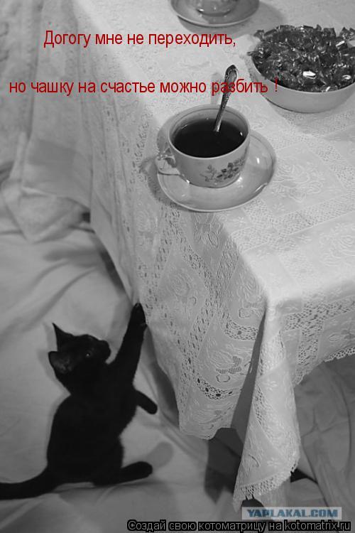 Котоматрица: Догогу мне не переходить,  но чашку на счастье можно разбить !