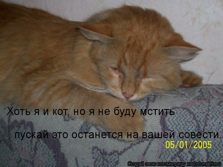Котоматрица: Хоть я и кот, но я не буду мстить пускай это останется на вашей совести.. пускай это останется на вашей совести..