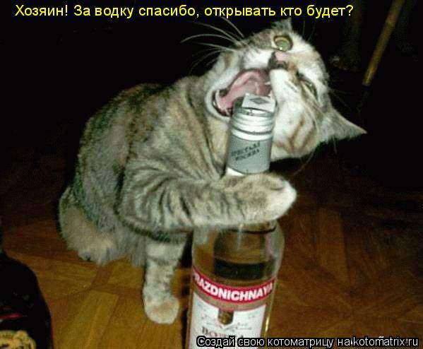 Котоматрица: Хозяин! За водку спасибо, открывать кто будет?