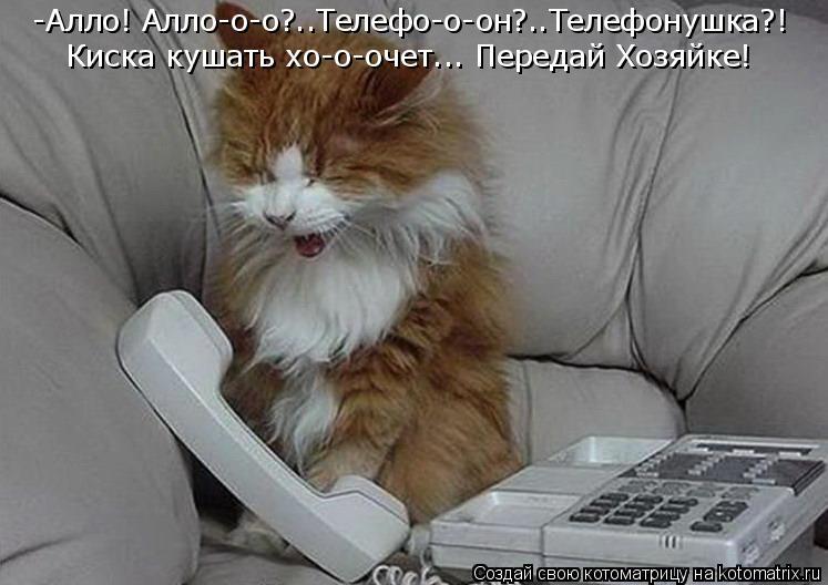 Котоматрица: -Алло! Алло-о-о?..Телефо-о-он?..Телефонушка?! Киска кушать хо-о-очет... Передай Хозяйке!