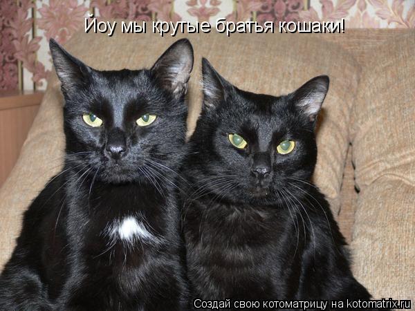 Котоматрица: Йоу мы крутые братья кошаки!