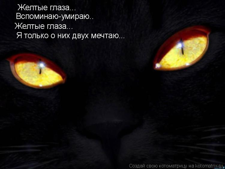 Котоматрица: Желтые глаза... Вспоминаю-умираю.. Желтые глаза... Я только о них двух мечтаю...