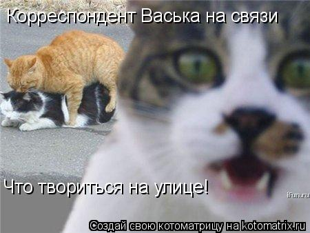 Котоматрица: Корреспондент Васька на связи Что твориться на улице!