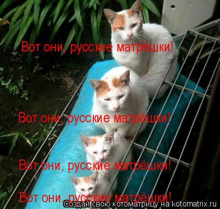 Котоматрица: Вот они, русские матрёшки! Вот они, русские матрёшки! Вот они, русские матрёшки! Вот они, русские матрёшки!