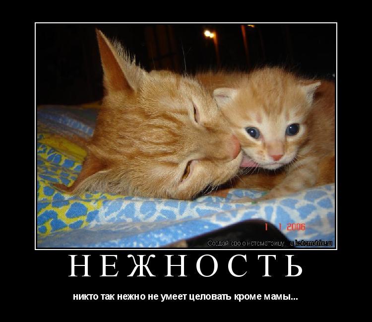 Котоматрица: НЕЖНОСТЬ никто так нежно не умеет целовать кроме мамы...