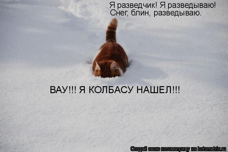 Котоматрица: Я разведчик! Я разведываю! Снег, блин, разведываю. ВАУ!!! Я КОЛБАСУ НАШЕЛ!!!
