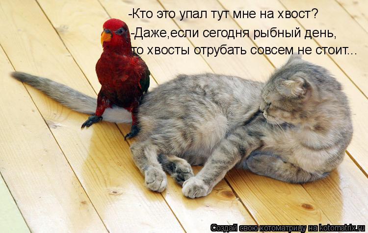 Котоматрица: -Кто это упал тут мне на хвост? -Даже,если сегодня рыбный день, то хвосты отрубать совсем не стоит...
