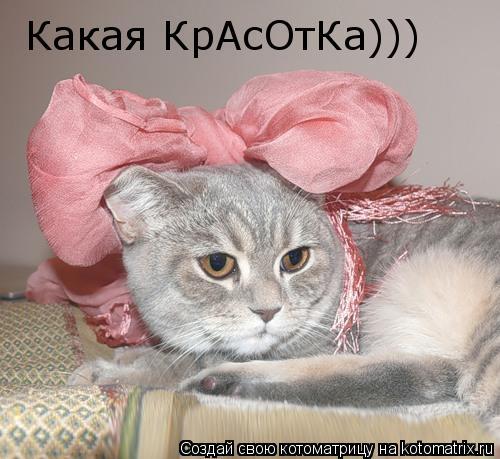 Котоматрица: Какая КрАсОтКа)))
