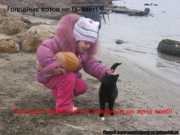 Котоматрица: Голодных котов не бывает!  Если кот притворяется голодным он жрет хлеб!