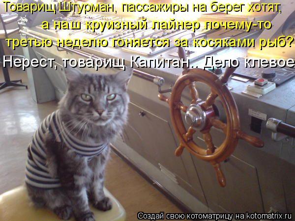Котоматрица: Нерест, товарищ Капитан.. Дело клевое. Товарищ Штурман, пассажиры на берег хотят, третью неделю гоняется за косяками рыб? а наш круизный лайн