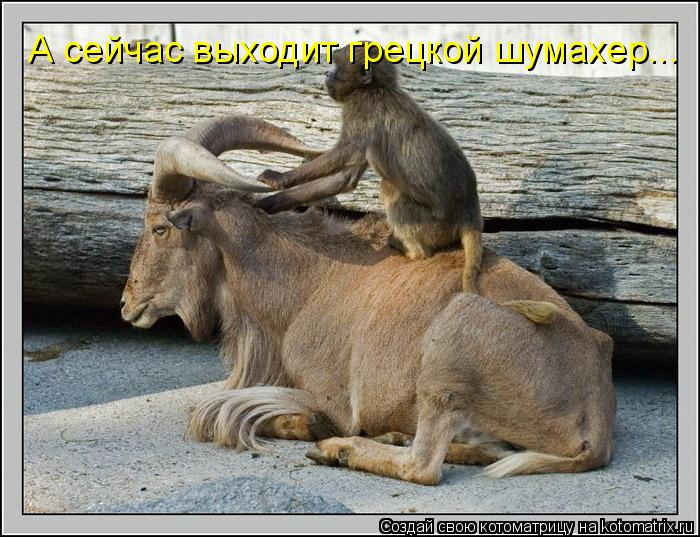 Котоматрица: А сейчас выходит грецкой шумахер...