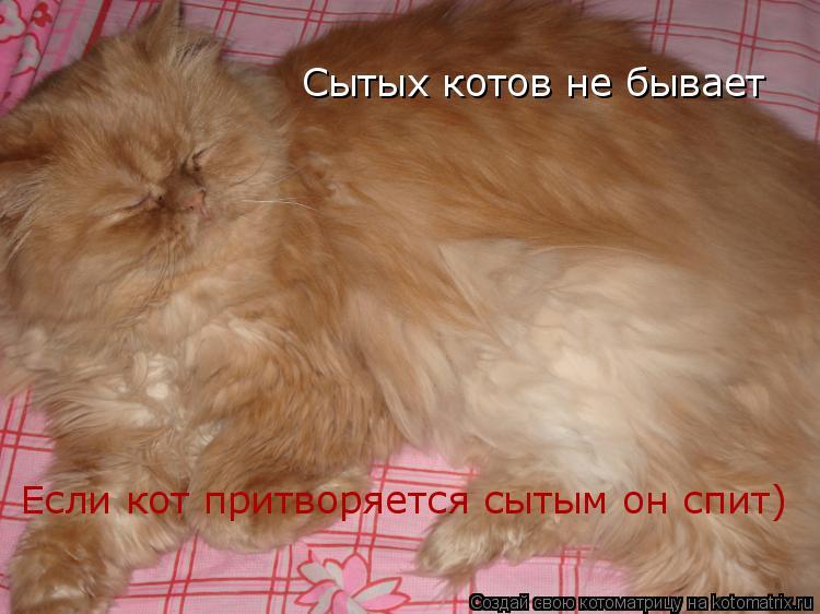 Котоматрица: Сытых котов не бывает Если кот притворяется сытым он спит)