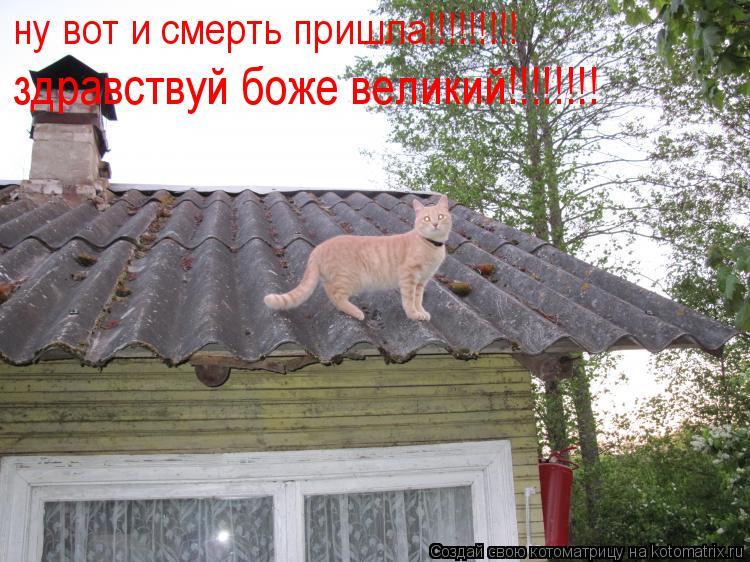 Котоматрица: ну вот и смерть пришла!!!!!!!!! здравствуй боже великий!!!!!!!!