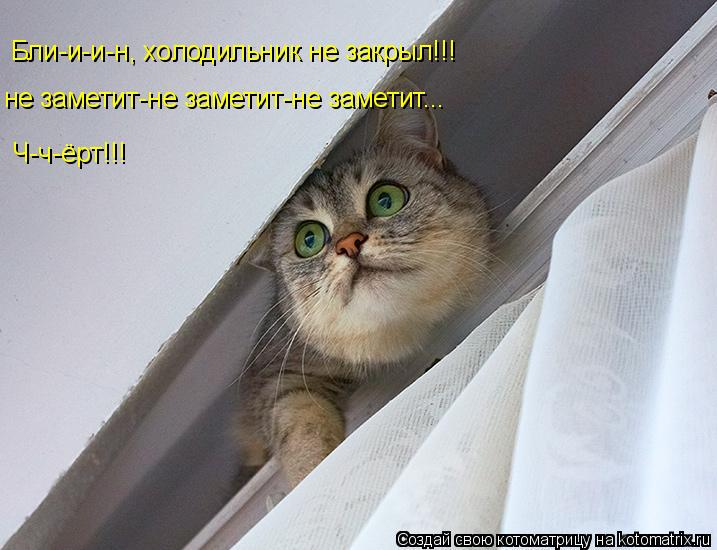 Котоматрица: Бли-и-и-н, холодильник не закрыл!!! не заметит-не заметит-не заметит... Ч-ч-ёрт!!!