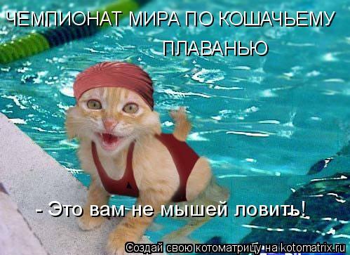Котоматрица: ЧЕМПИОНАТ МИРА ПО КОШАЧЬЕМУ ПЛАВАНЬЮ - Это вам не мышей ловить!