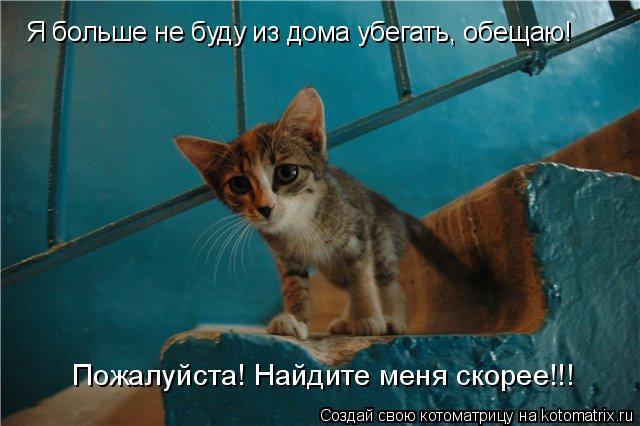 Котоматрица: Я больше не буду из дома убегать, обещаю! Пожалуйста! Найдите меня скорее!!!