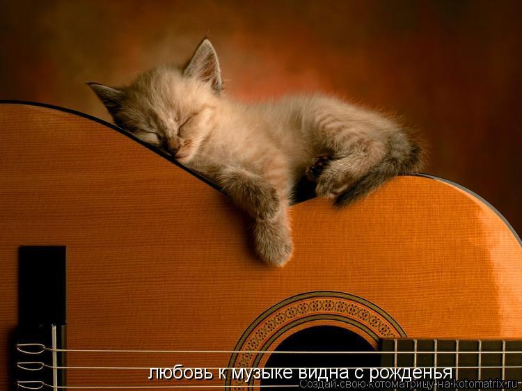 Котоматрица: любовь к музыке видна с рожденья