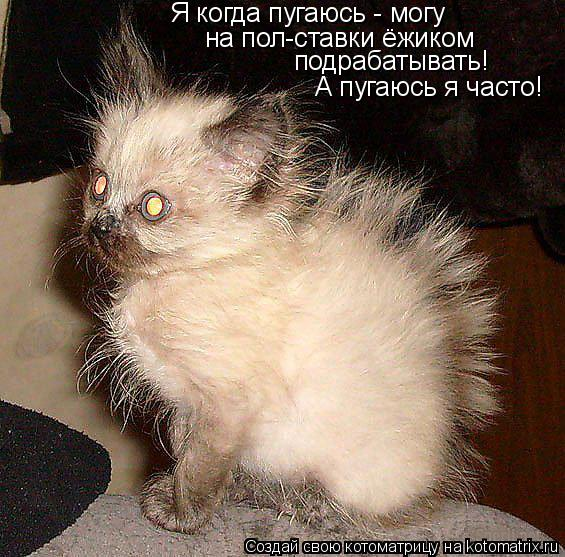 Котоматрица: Я когда пугаюсь - могу на пол-ставки ёжиком подрабатывать! А пугаюсь я часто!
