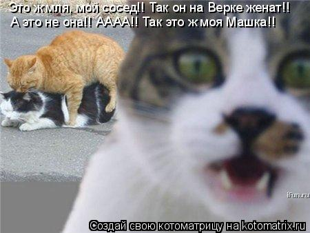 Котоматрица: Это ж мля, мой сосед!! Так он на Верке женат!! А это не она!! АААА!! Так это ж моя Машка!!