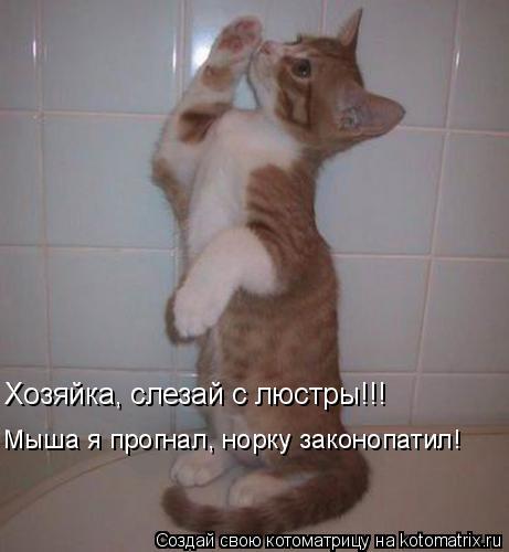 Котоматрица: Мыша я прогнал, норку законопатил! Хозяйка, слезай с люстры!!!
