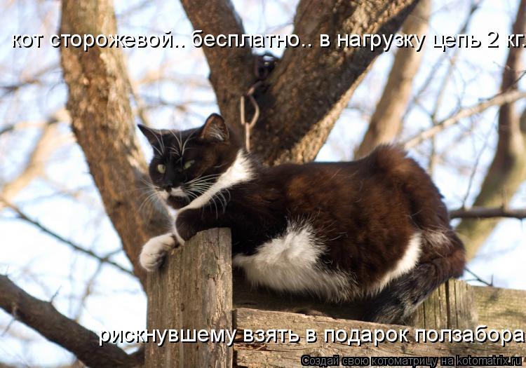 Котоматрица: кот сторожевой.. бесплатно.. в нагрузку цепь 2 кг... рискнувшему взять в подарок ползабора!