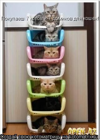 Котоматрица: Покупаеш 7 котов и 7 домиков для кошек!