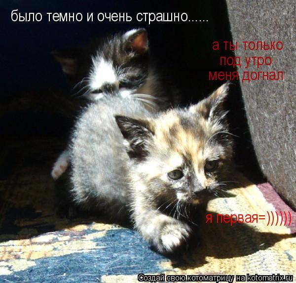 Котоматрица: было темно и очень страшно......  а ты только   под утро   меня догнал я первая=))))))