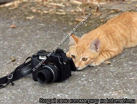 Котоматрица: И повезло мне,что я работаю фотографом...