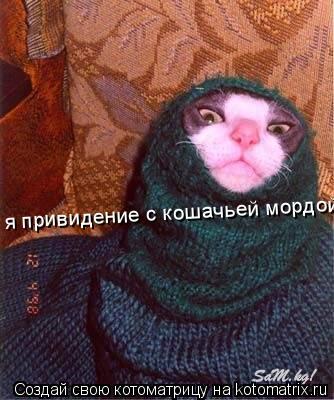 Котоматрица: я привидение с кошачьей мордой!