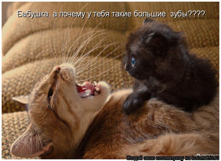 Котоматрица: Бабушка, а почему у тебя такие большие  зубы????