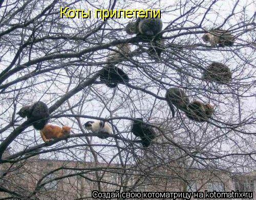 Котоматрица: Коты прилетели