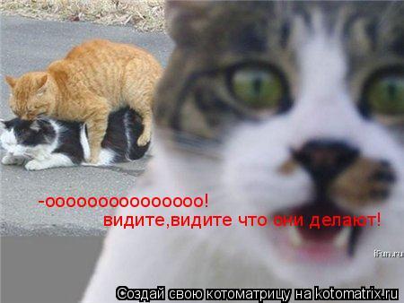 Котоматрица: -ооооооооооооооо! видите,видите что они делают!