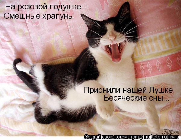 Котоматрица: На розовой подушке Смешные храпуны Приснили нашей Лушке Бесяческие сны...