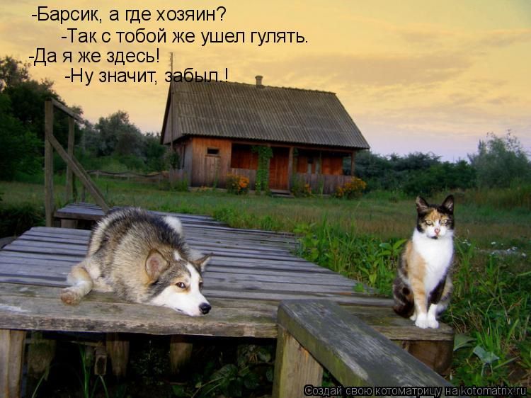 Котоматрица: -Барсик, а где хозяин? -Так с тобой же ушел гулять. -Да я же здесь! -Ну значит, забыл.!