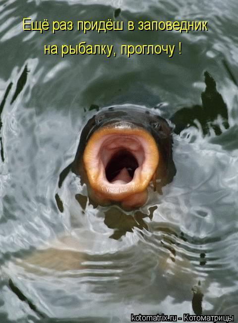 Котоматрица: Ещё раз придёш в заповедник  на рыбалку, проглочу !