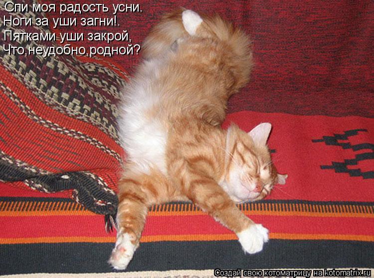 Котоматрица: Спи моя радость усни. Ноги за уши загни!. Пятками уши закрой, Что,неудобно,родной?