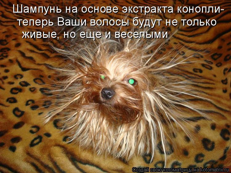 Котоматрица: Шампунь на основе экстракта конопли-   теперь Ваши волосы будут не только   живые, но еще и веселыми